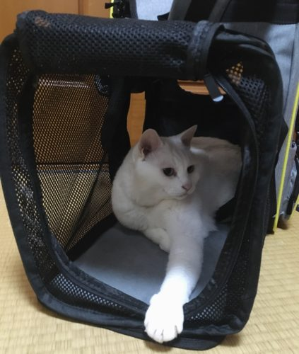 猫 防災 災害対策 犬 ペットキャリー 防災BOOK 避難セット くつろぐ ゆったり